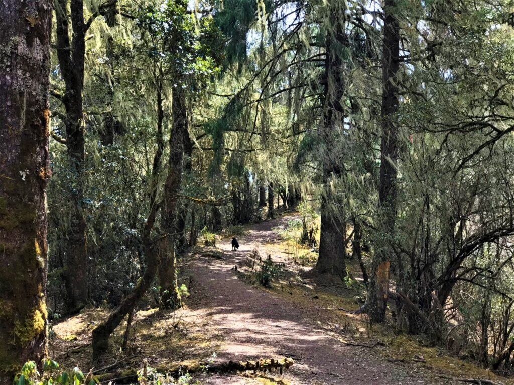 The trekking trails to Bumdra Camp