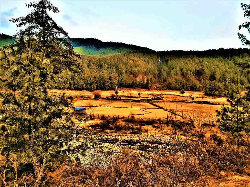 Pasture at Tang Valley
