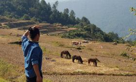 Ten Things To Do in Punakha