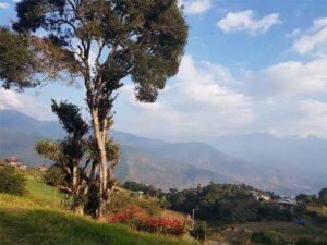 View of Punakha