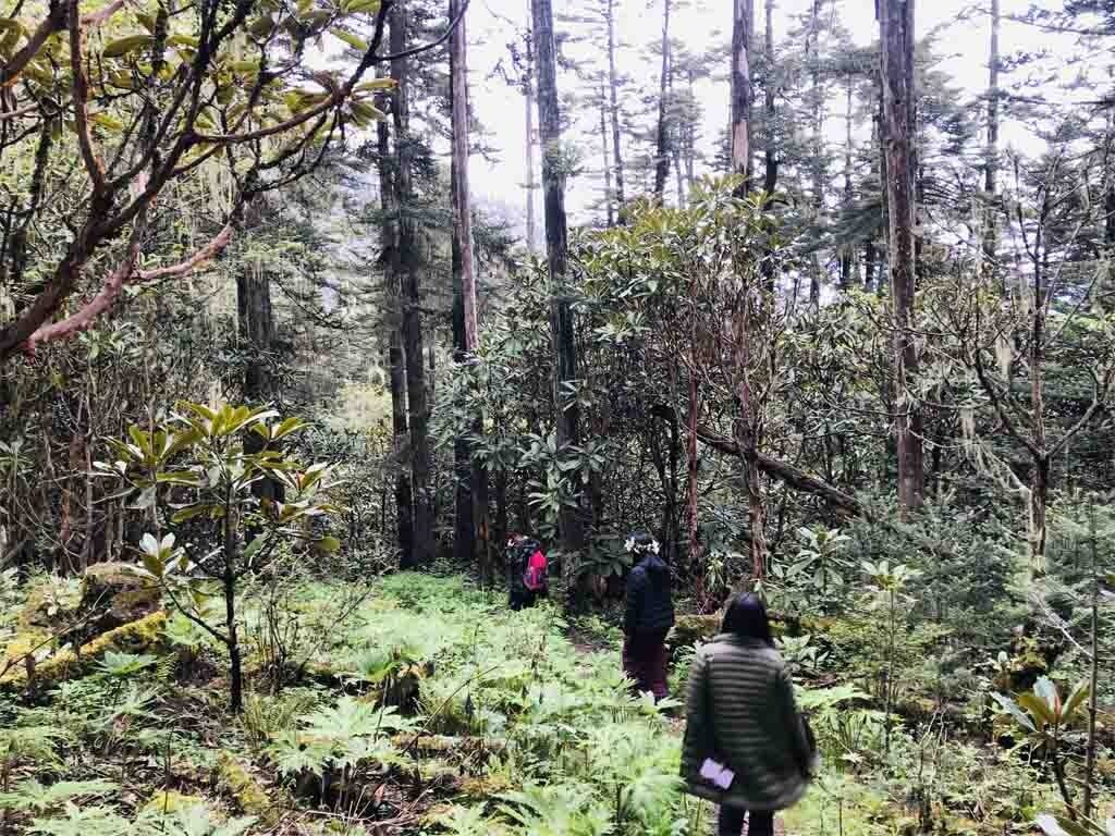 Kila Hike through forest of Rhododendrons